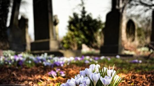 © https://www.pexels.com/photo/purple-crocus-in-bloom-during-daytime-161280/